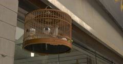 4K Bird Chirps and Jumps in Cage Stock Footage