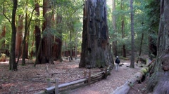 Big Basin Redwoods State Park - stock footage