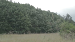 Meadow surrounded by woods. Dry grass. Stock Footage