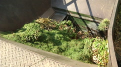 Garden Clippings - Disposal in Compactor Stock Footage