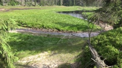 4k Spring of river Oder on grassy glade between trees Harz mountain Stock Footage