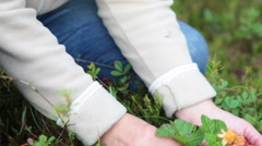 Female hands with cloudberries laying in handful and on the earth, Karelia, Rus Stock Footage