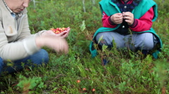 Mom and son eating just picking cloudberries in a forest in the swamp, mosquitoe Stock Footage