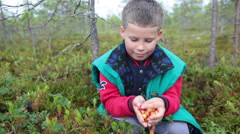 Small cute boy holding cloudberries cupped hands and eating fresh berries  Stock Footage