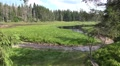 4k Spring of river Oder on grassy glade between trees Harz mountain 4k or 4k+ Resolution