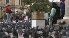 Food sellers for pigeons in Murillo Square in La Paz, Bolivia - stock footage