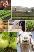 Farm Animal Collage Stock Photos