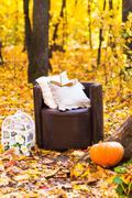 old  brown garden chair in autumn leaves - stock photo