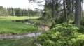 4k Spring of river Oder on grassy glade between trees Harz panning 4k or 4k+ Resolution