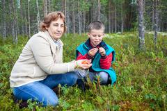 Stock Photo of Mother and son are harvested and eaten fresh cloudberries in the forest in th