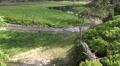4k Spring of river Oder on grassy glade between trees Harz tilt 4k or 4k+ Resolution
