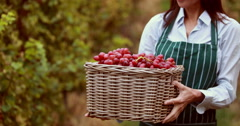 Brunette winegrower holding a red grape basket Stock Footage