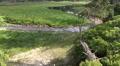 Spring of river Oder on grassy glade between trees Harz tilt HD Footage