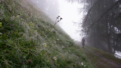 Wet meadow in the Alps at summer season Stock Footage