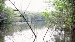 Branch erect in river glide Stock Footage