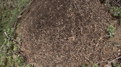 Huge anthill time lapse camera motion Stock Footage