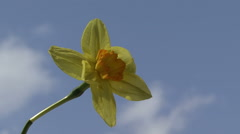 Narcissus in the sky - stock footage