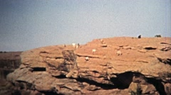 1972: Daredevil mountain goats watch the edge of a cliff with ease. Stock Footage