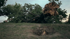 A tree uprooted by strong winds Stock Footage