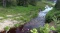 4k Harz mountain range glade with river Oder spring water 4k or 4k+ Resolution