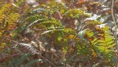 Cyatheales tree fern swing on wind  4K 2160p UHD  footage - Shallow DOF  red Stock Footage