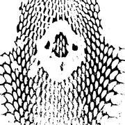 cobra head Snake skin abstract texture. black on white background. Vector - stock illustration