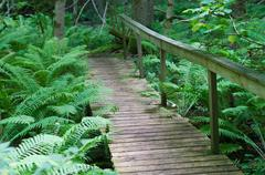 Wooden bridge on a hiking trail through dense fern forest - stock photo