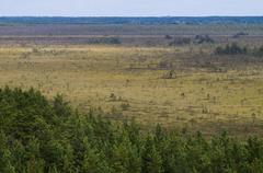 Bog area aerial view Kuvituskuvat