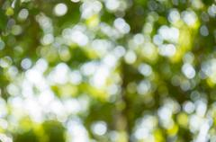 Green bokeh defocus art abtracts background from trees - stock photo