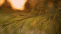 Two clip combo of plant leaves blowing in the wind - stock footage