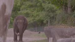 Elephant walking in slow motion Stock Footage