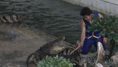 Crocodile Wrestling at Zoo in Bangkok Stock Footage
