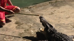 Crocodile Wrestling at Zoo in Bangkok Stock Footage
