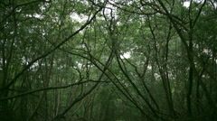 Forest canopy upward shot Stock Footage