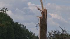 Teviodale Ontario EF-2 Tornado damage and destruction scene August 2 2015 Stock Footage