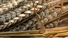 Still life with wheat and barley, shot with slider Stock Footage