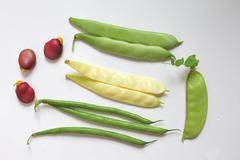 Variety of fresh organic legumes : green and yellow beans, pea, broad bean - stock photo