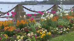 Flowers at Anse de Solidor Area of St Malo France Stock Footage
