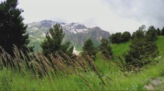 Beautiful long grass swaying in the wind Stock Footage