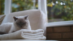 Safe at home treasured pet 4K Stock Footage