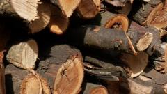 Stock Video Footage of Tree logs arranged slow tilting 4K 3840X2160 UltraHD footage - Cutted tree lo