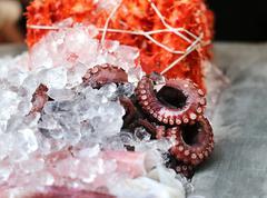 Octopus are on ice - stock photo