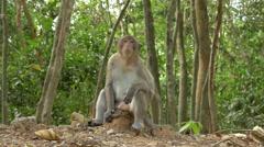 Monkey Eating Banana  - Angkor Wat Temple Cambodia - stock footage
