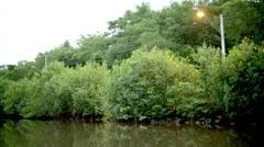 Lamp poles near river vegetation Stock Footage