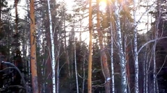 Winter sunset in pine and birch forest. Sunlight through trees Stock Footage