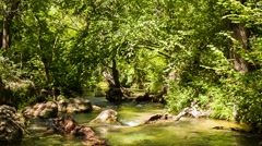 Small Calm Mountain River Flowing In Sunny Green Forest - stock footage