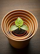 Plant sprouting in nesting flowerpot - stock photo