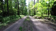 The car goes through the forest. Forest road in the national park Stock Footage