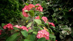 Pink flower plant spikey stalk Stock Footage