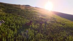 Horses Running Up Hill Aerial Shot Mountain Pastures Meadow Landscape Beauty - stock footage